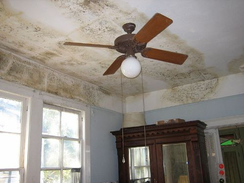 lettings agents and landlords warned about the cost of damp and mould in rental properties
